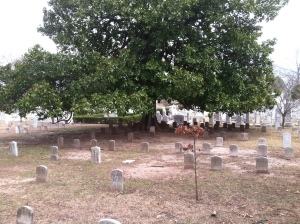 This is just one of several sections of Confederate graves.