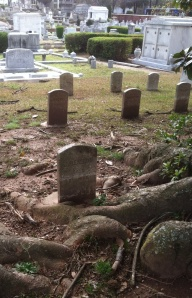 This grave was a photo request for Find a Grave. The roots of the tree have grown around the headstone.