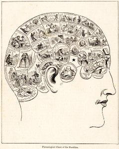 A phrenology diagram from 1883. Phrenologists thought the human mind has a set of different mental faculties, with each particular one represented in a different area of the brain. Photo courtesy of People's Cyclopedia of Universal Knowledge.