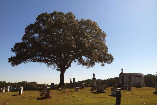 I spent a beautiful, sunny day at Greenwood Cemetery this year.