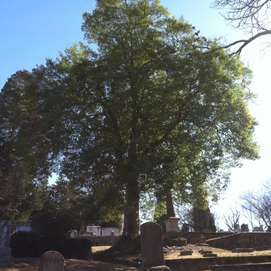 A towering tree provides shade for those resting in peace at Decatur Cemetery.