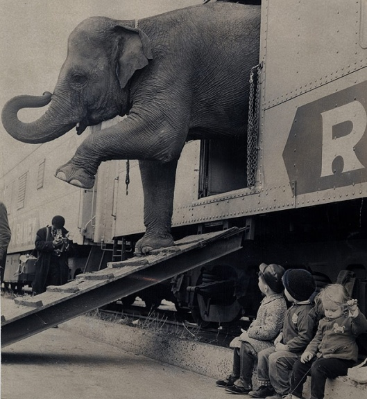 Targa the elephany emerges from the Ringling Brothers circus train in the Bronx, N.Y. This is not the elephant that was dissected at Oglethorpe.