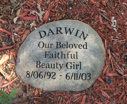 Darwin's  memorial stone is one of several in Horseshoe Gardens.