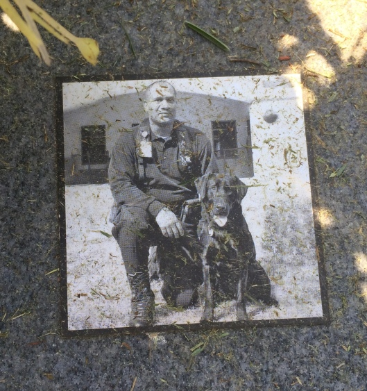 K-9 Sherrif was the Atlanta Police Department's first suicide bomber detection dog. My apologies for the grass bits, the staff had just mowed.