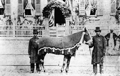 Lincoln's beloved horse, Old Bob, stood riderless at the funeral procession. A bronze statue of Lincoln standing beside Old Bob was created by Ivan Schwartz in 2009 and stands outside President Lincoln's Cottage at the Soldier's Home in Washington, D.C.
