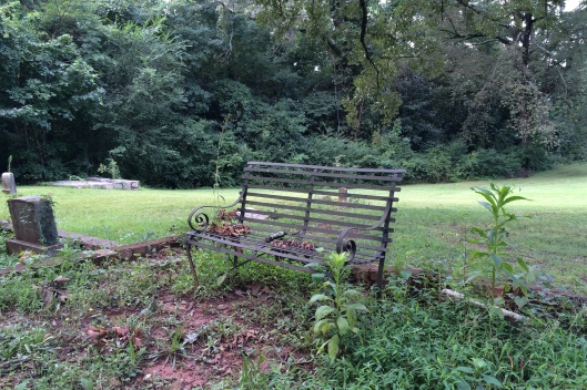An old bench awaits visitors to pause and sit beneath the towering trees.