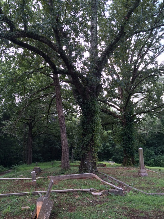 There are a number of enormous old trees like this one on the grounds of South-View.