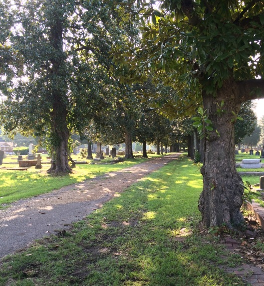 Just one of several tee-lined drives in Magnolia Cemetery.