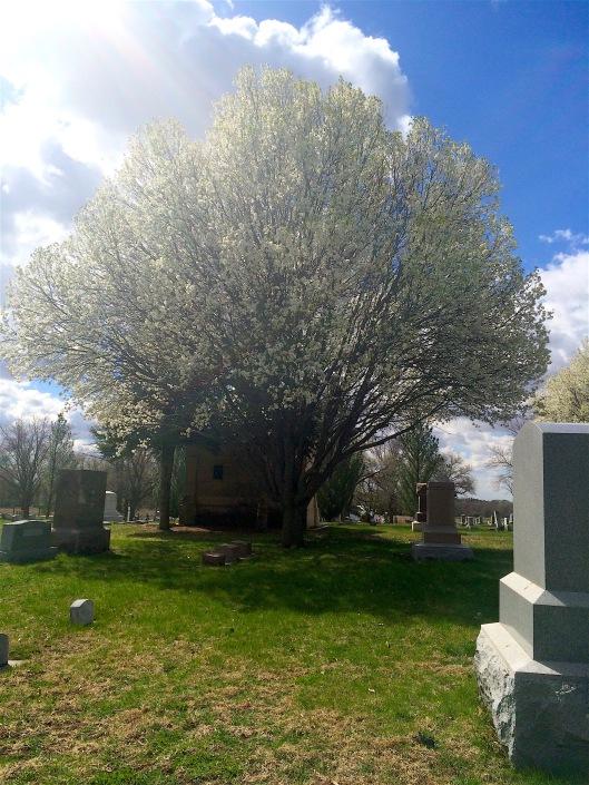 greenwoodtree